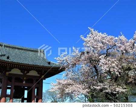 Ikegami Honmonji Temple, Ota-ku, Tokyo 50215308