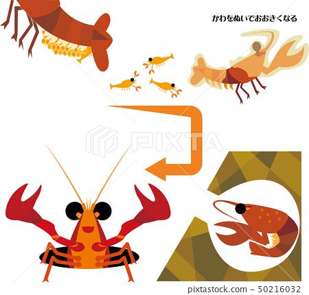 小龙虾生长周期 50216032