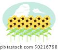 Sunflower field and Izumo cloud 50216798