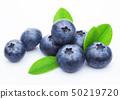 Fresh raw organic blueberries with leaf on white 50219720