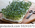 Yellow mustard sprouts growing on cotton wool 50241073