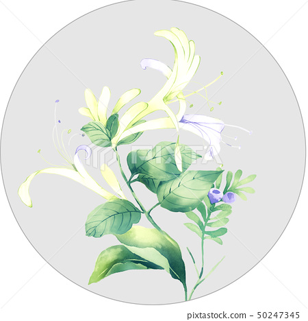 Watercolor floral combination and elegant hydrangea 50247345