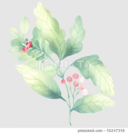 水彩花卉組合和優雅的繡球花 50247356