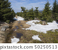 footpath in Jizerske hory mountain in spring with lush green spruce tree forest and melting snow 50250513