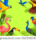 Background with tropical exotic birds. 50250638