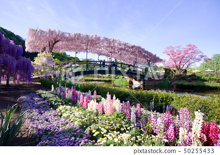 足利市足利花卉公園 50255433