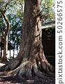 십 왕자 신사의 녹나무 50266575