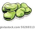 蔬菜 蚕豆 水彩画 50269313