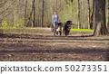 Woman walking with bernese shepherd dog puppies 50273351
