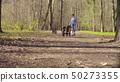 Woman walking with bernese shepherd dog puppies 50273355
