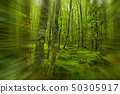 forest, Killarney National Park, County Kerry, 50305917