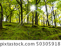 forest, Killarney National Park, County Kerry, 50305918