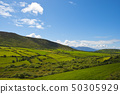 Typical green Irish country side with blue sky and 50305929