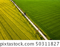 rapeseed and wheat fields 50311827