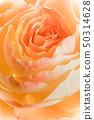 手工纸康乃馨,礼物,母亲节,花束 50314628