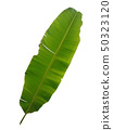 Green banana leaf with isolated white 50323120