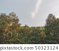 Mountain with forest and sky background  50323124