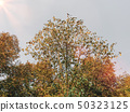 Nature tree with leaves and sky 50323125