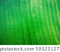 Green foliage texture design background  50323127