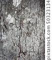 Bark of a tree.Tree bark texture  50323134