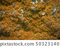 Old brown moss on stone texture background 50323140
