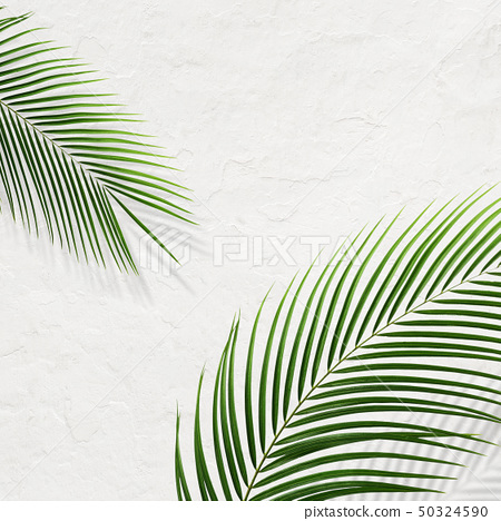 배경 - 남국 - 여름 - 해변 - 시라 50324590