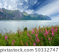 Summer Senja coast (Norway) 50332747