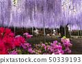与花公园和紫藤的一个场面 50339193