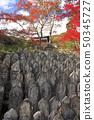 11 월 단풍의 正暦寺 (생략 じ) - 야마토의 단풍 - 50345727