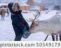 Little boy feeding reindeer in the winter 50349179