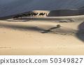 사막 50349827