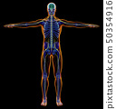 Man diagram x-ray nervous system. 50354916