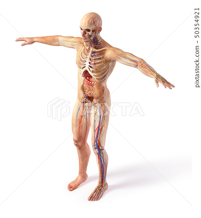 Man total anatomy systems diagram with ghost 50354921