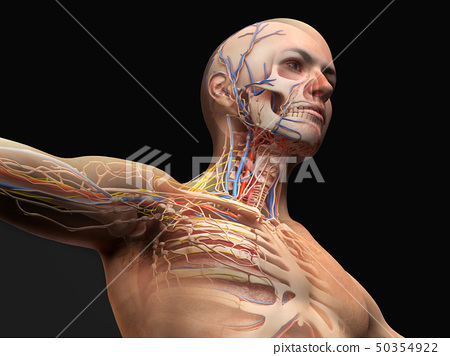 Man head and chest anatomy diagram with ghost 50354922