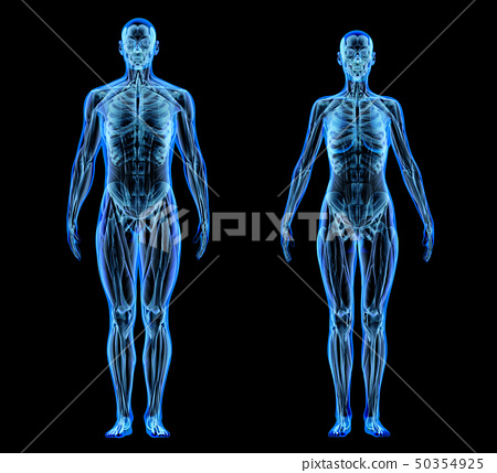 Man and woman muscle and skeletal systems. X-ray. 50354925