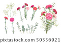 Set Carnation flowers 50356921
