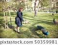 Woman walking among the peacocks in a public park 50359981