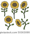 vector set of sunflower 50363090