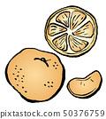橘子 50376759