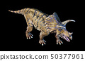 Triceratops 3d rendering On black background 50377961