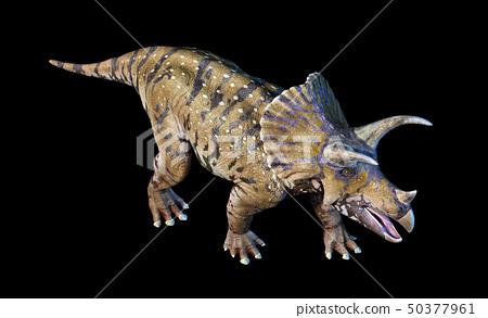 Triceratops 3d rendering On black background 50377961