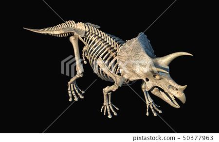Triceratops skeleton 3d rendering on black 50377963