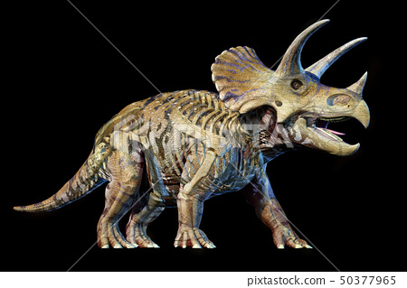 Triceratops with skeleton 3d rendering on black 50377965