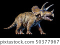 Triceratops 3d rendering On black background 50377967
