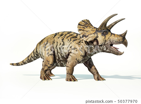 Triceratops 3d rendering On white background 50377970