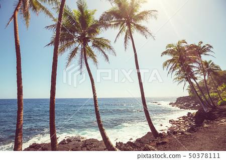 Hawaiian beach 50378111