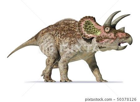 Triceratops 3d rendering On white background 50378126