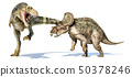 T-rex dinosaur attacking a triceratops. 50378246