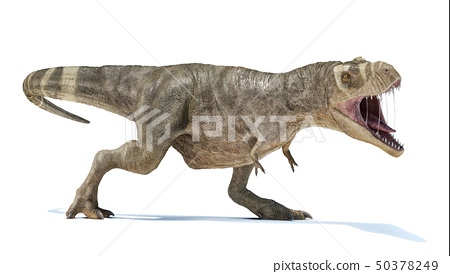T-rex full body perspective view. 50378249