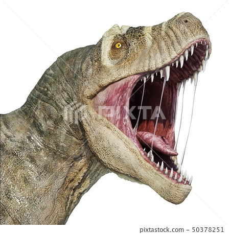 T-rex head close-up. 50378251